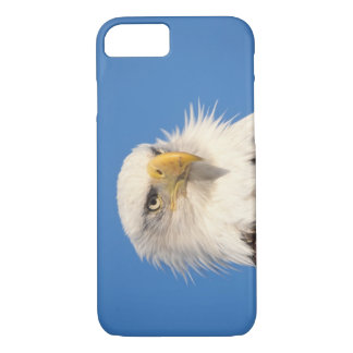 bald eagle, Haliaeetus leucocephalus, close up, iPhone 8/7 Case