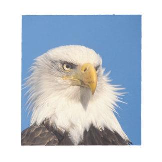bald eagle, Haliaeetus leucocephalus, close up, Notepad