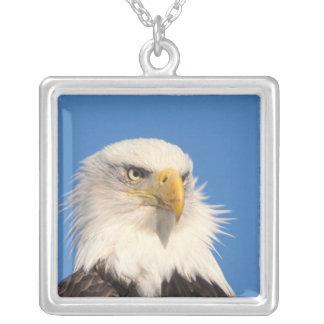bald eagle, Haliaeetus leucocephalus, close up, Silver Plated Necklace