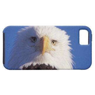 bald eagle, Haliaeetus leucocephalus, head shot, Case For The iPhone 5