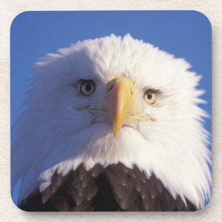 bald eagle, Haliaeetus leucocephalus, head shot, Coaster
