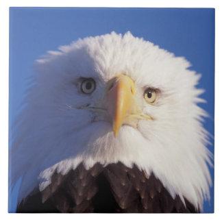 bald eagle, Haliaeetus leucocephalus, head shot, Large Square Tile
