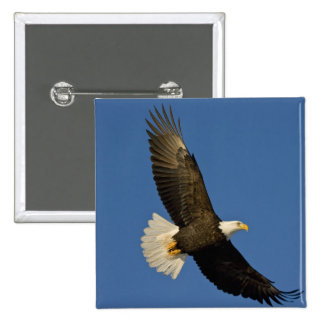Bald Eagle, Haliaeetus leucocephalus, Homer, 15 Cm Square Badge