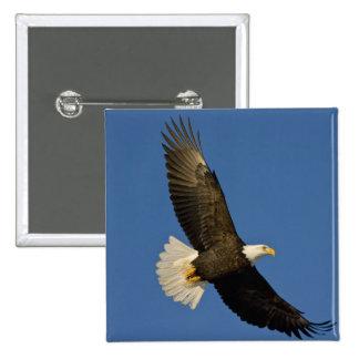 Bald Eagle, Haliaeetus leucocephalus, Homer, 15 Cm Square Badge