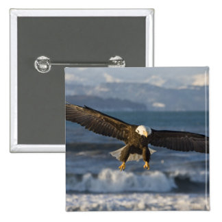 Bald Eagle, Haliaeetus leucocephalus, Homer, 3 15 Cm Square Badge