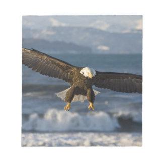 Bald Eagle, Haliaeetus leucocephalus, Homer, 3 Notepad