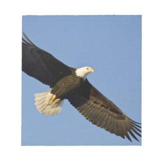 Bald Eagle, Haliaeetus leucocephalus, Homer, 4 Notepad