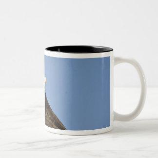 Bald Eagle, Haliaeetus leucocephalus, Homer, 4 Two-Tone Coffee Mug