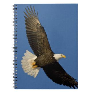 Bald Eagle, Haliaeetus leucocephalus, Homer, Notebook