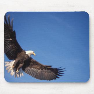 bald eagle, Haliaeetus leucocephalus, in flight 2 Mouse Mat