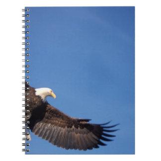 bald eagle, Haliaeetus leucocephalus, in flight 2 Notebooks