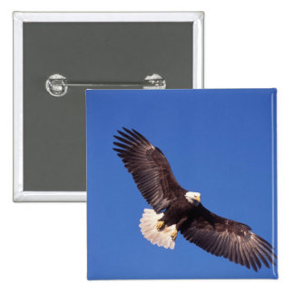 bald eagle, Haliaeetus leucocephalus, in flight 3 15 Cm Square Badge