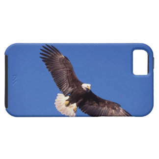 bald eagle, Haliaeetus leucocephalus, in flight 3 Case For The iPhone 5