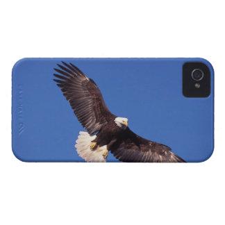 bald eagle, Haliaeetus leucocephalus, in flight 3 iPhone 4 Case-Mate Case