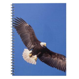 bald eagle, Haliaeetus leucocephalus, in flight 3 Notebooks