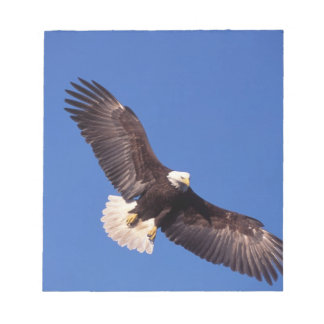 bald eagle, Haliaeetus leucocephalus, in flight 3 Notepad