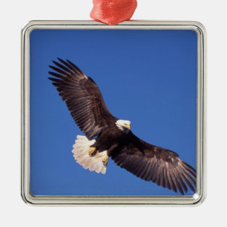 bald eagle, Haliaeetus leucocephalus, in flight 3 Silver-Colored Square Decoration