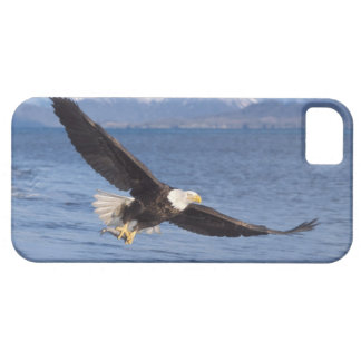 bald eagle, Haliaeetus leucocephalus, in flight 4 Barely There iPhone 5 Case