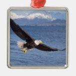 bald eagle, Haliaeetus leucocephalus, in flight 4 Christmas Tree Ornament