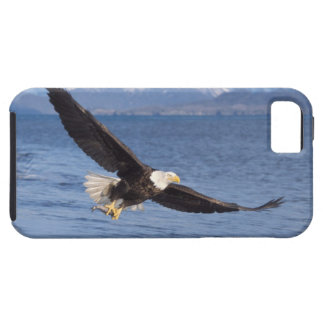 bald eagle, Haliaeetus leucocephalus, in flight 4 iPhone 5 Cover