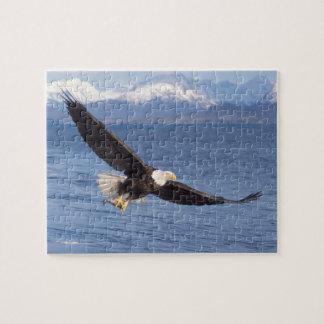 bald eagle, Haliaeetus leucocephalus, in flight 4 Jigsaw Puzzle