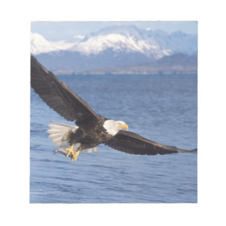 bald eagle, Haliaeetus leucocephalus, in flight 4 Notepad