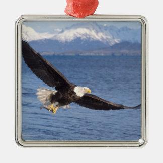 bald eagle, Haliaeetus leucocephalus, in flight 4 Silver-Colored Square Decoration