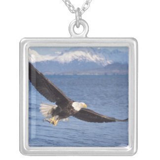 bald eagle, Haliaeetus leucocephalus, in flight 4 Silver Plated Necklace