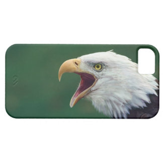 Bald Eagle (Haliaeetus leucocephalus) iPhone 5 Case