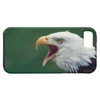 Bald Eagle (Haliaeetus leucocephalus) iPhone 5 Cover