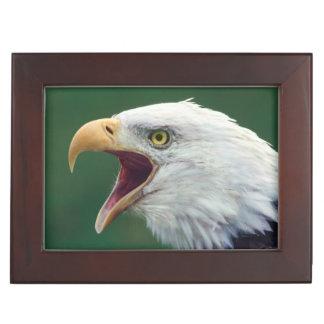 Bald Eagle (Haliaeetus leucocephalus) Keepsake Box