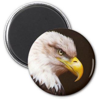 Bald eagle (Haliaeetus leucocephalus) Magnets