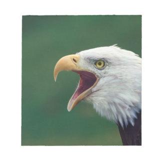 Bald Eagle (Haliaeetus leucocephalus) Notepad
