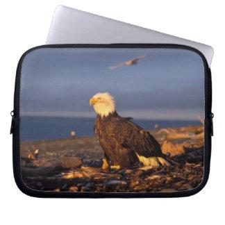 bald eagle, Haliaeetus leucocephalus, on a beach Laptop Sleeves