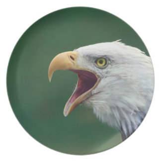 Bald Eagle (Haliaeetus leucocephalus) Plate
