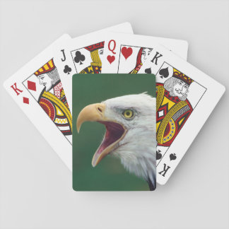 Bald Eagle (Haliaeetus leucocephalus) Playing Cards