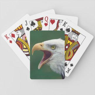 Bald Eagle (Haliaeetus leucocephalus) Poker Deck