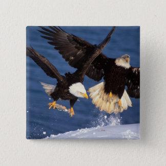 bald eagle, Haliaeetus leucocephalus, taking off 15 Cm Square Badge