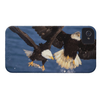 bald eagle, Haliaeetus leucocephalus, taking off Case-Mate iPhone 4 Cases