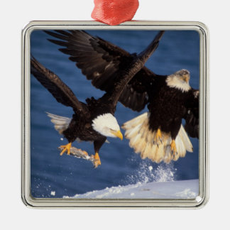 bald eagle, Haliaeetus leucocephalus, taking off Christmas Ornament