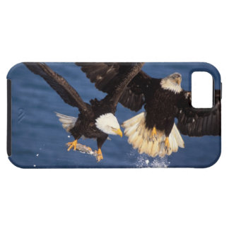 bald eagle, Haliaeetus leucocephalus, taking off iPhone 5 Cases