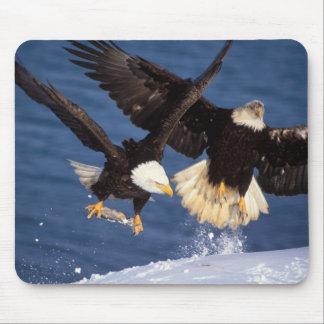 bald eagle, Haliaeetus leucocephalus, taking off Mouse Mat