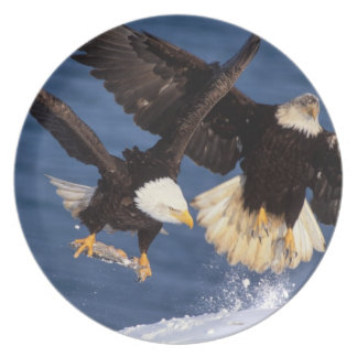 bald eagle, Haliaeetus leucocephalus, taking off Party Plates
