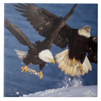 bald eagle, Haliaeetus leucocephalus, taking off Tile