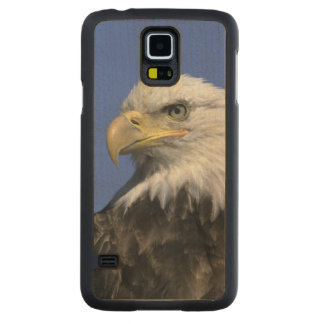 Bald Eagle, (Haliaeetus leucocephalus), wild, Carved Maple Galaxy S5 Case