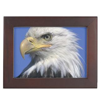 Bald Eagle, (Haliaeetus leucocephalus), wild, Keepsake Box