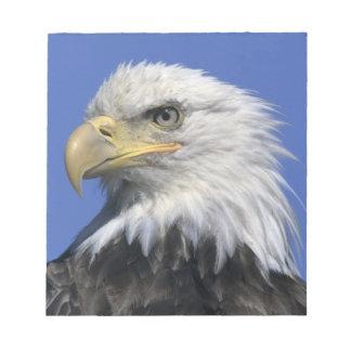 Bald Eagle, (Haliaeetus leucocephalus), wild, Notepad
