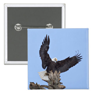 Bald Eagle (Haliaeetus leucocephalus) with wings 15 Cm Square Badge