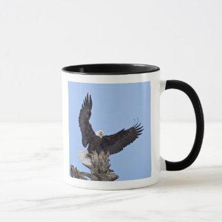 Bald Eagle (Haliaeetus leucocephalus) with wings Mug