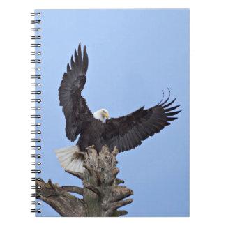 Bald Eagle (Haliaeetus leucocephalus) with wings Notebooks
